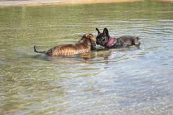 Møte i dammen