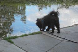 Tørst hund