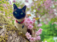 Sushie in the blossoms.jpg