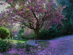 blossoms at Xanadu.jpg