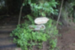 Jungle-Signage-300x200.jpg