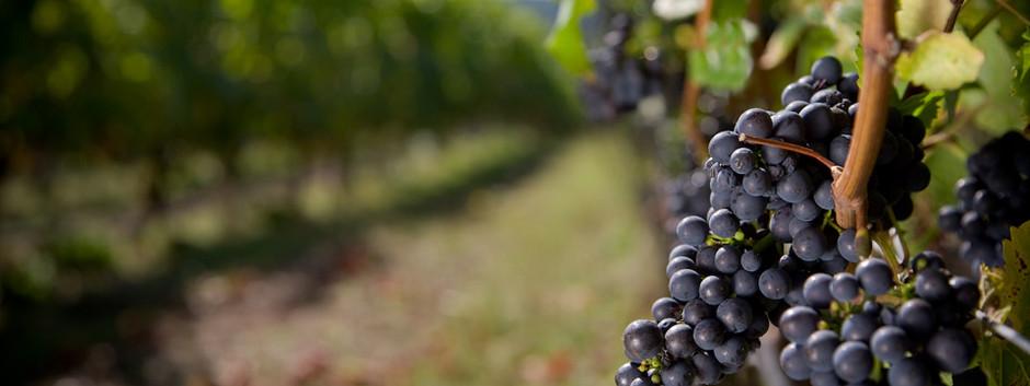 Favorite Wineries Closest to Xanadu