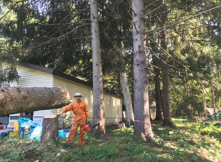 建築の準備・木の伐採スタート