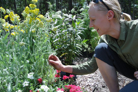 Exciting new study takes a close look at butterfly garden management and effectiveness