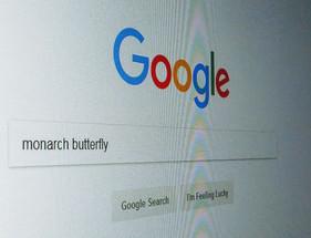 Tracking online interest in monarch butterflies