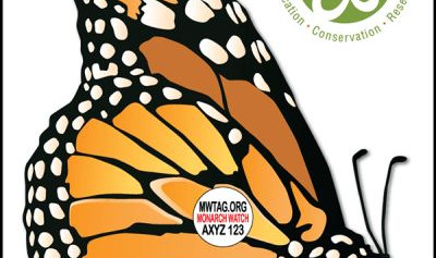Recoveries of tagged monarchs in Mexico - what do they really mean?