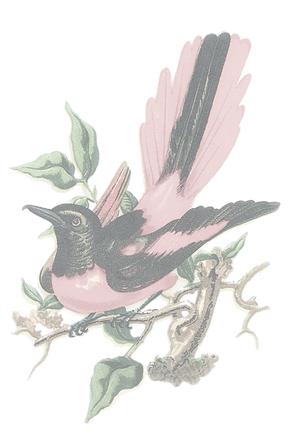 CLEAR BIRD.png