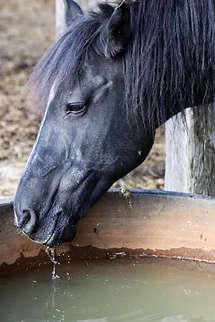 2018-09-29-HorsebackAdventure-013.jpg