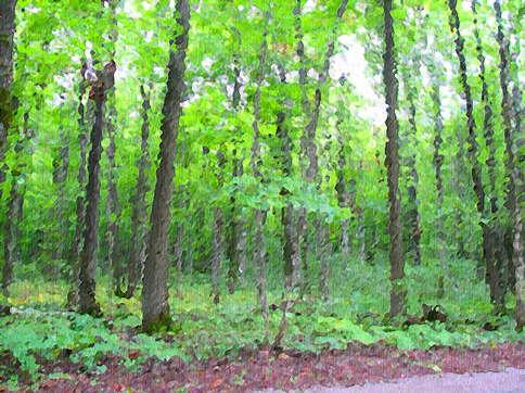 Oil-Forest.jpg