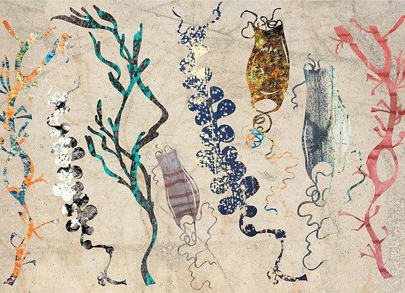 Seaweed Design