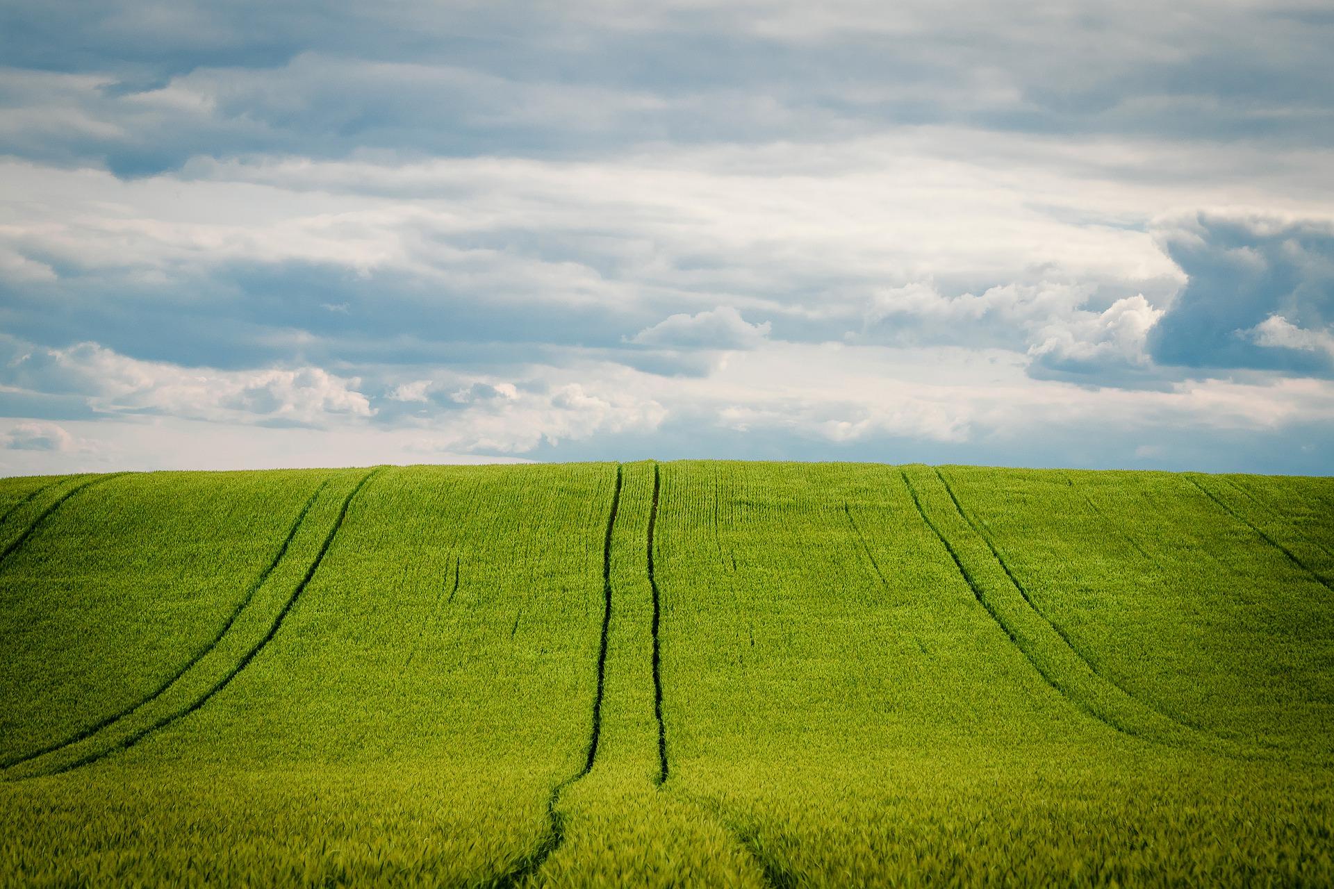 barley-5249498_1920