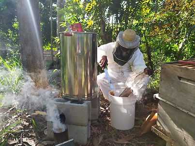 Honing oogsten.jpeg
