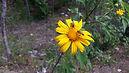 De bijen en bloemen.JPG