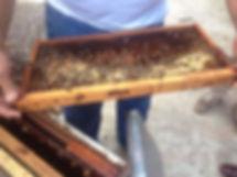 Guali_Dominicaans-Republiek_voedselzeker