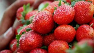 Strawberries_for_sale_at_Mahabaleshwar.j