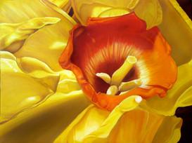 Fleur Jaune Oubliee
