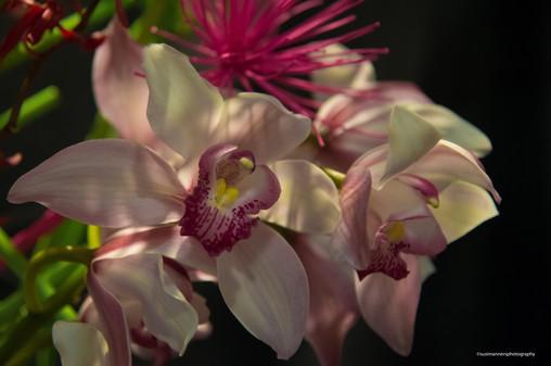 Orchid Show Santa Barbara_-17.jpg