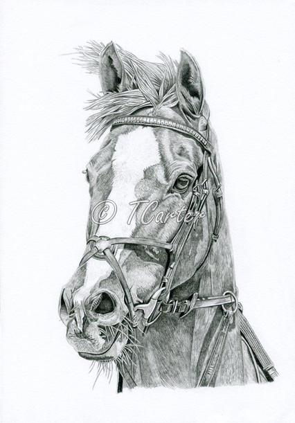 Anyone want their horse drawn?