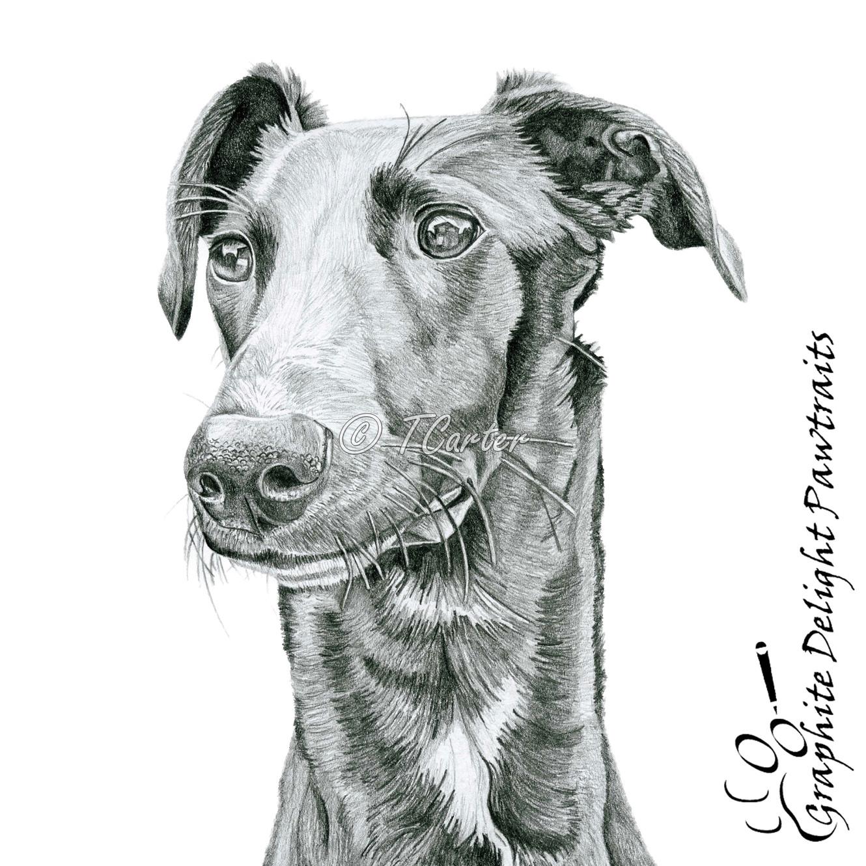 Pickle Nior green stripe martingale control dog collar lurcher whippet greyhound