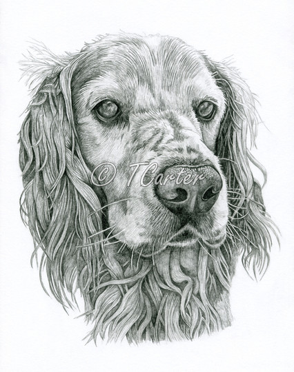Who likes Spaniels?!