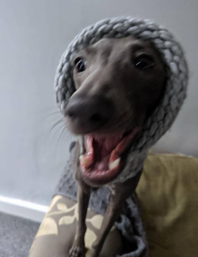 Small Dog Snood
