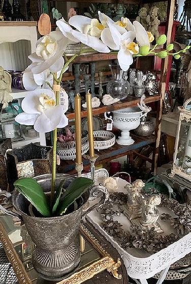 engrenet-hvid-orkide.jpg