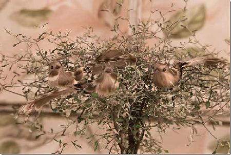 fugle-natur.png
