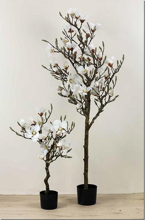 hvid-magnolie-2.png
