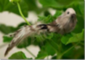 fugl-natur-2.png