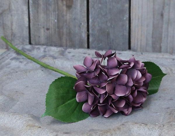 lilla-hortensia-1_edited.jpg