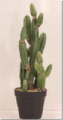 cowboy-kaktus.png