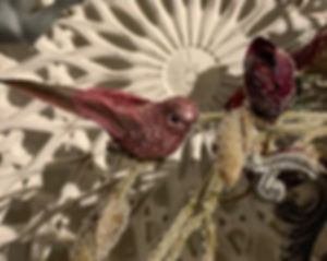 bordeaux-lille-fugl.jpg