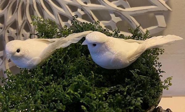 hvid-fugl-frost.jpg