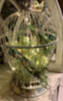 bur-airplant.jpg