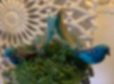 turkis-fugl.jpg
