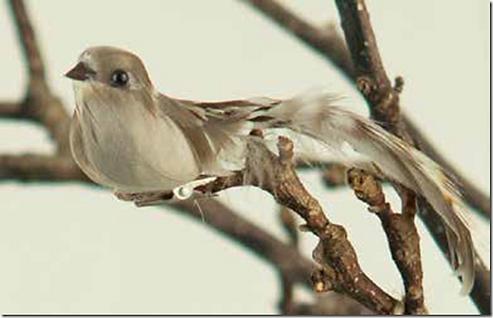 fugl-natur.png