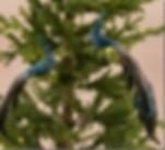 blue-paafugle-2.png