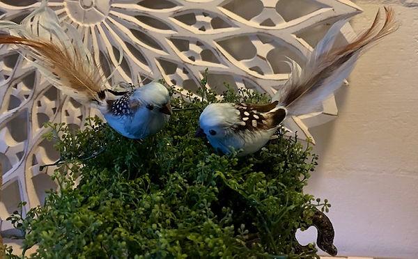 blue-fugl-natur-hale.jpg