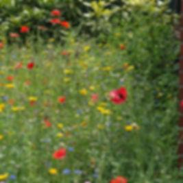 blomster_fra_frø-bombe.jpg