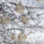 chickugler-ledlys.jpg