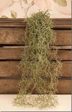 air-plante