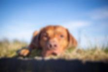 Nordlicht-Tierphysiotherapie