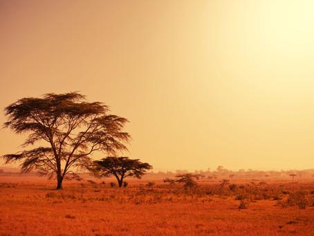 Chichewa - The Language of Malawi