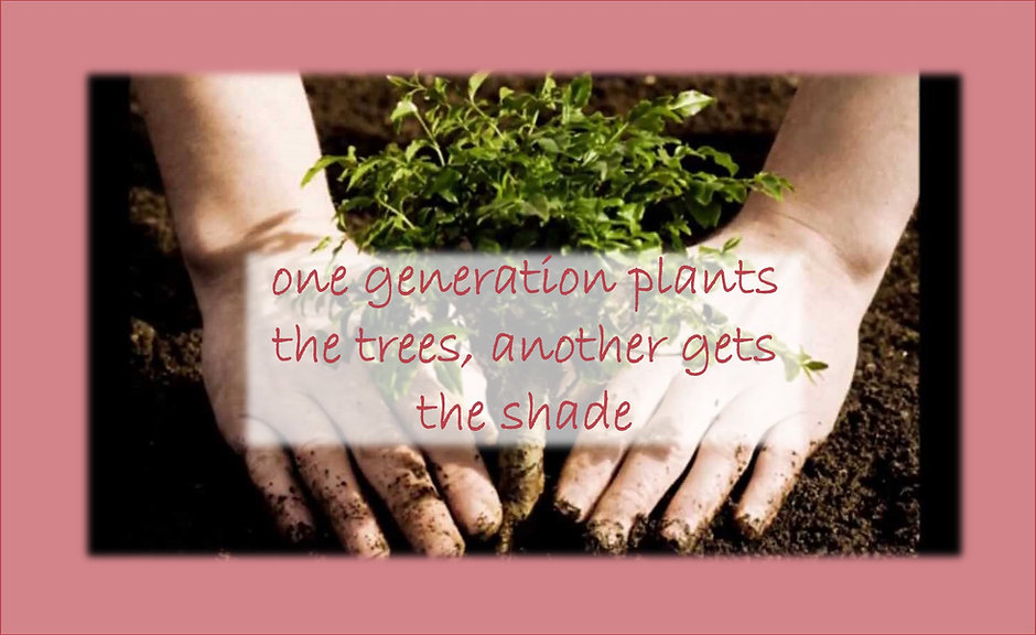 plant-a-tree-get-the-shade.jpg