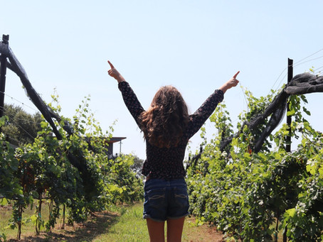 Family Friendly Wineries in Central Texas