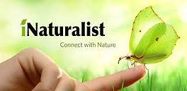 iNaturalist2.jpeg