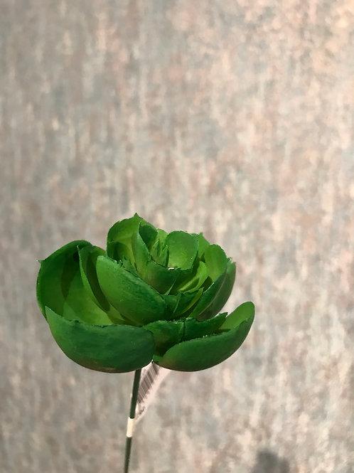 Echeveria pick