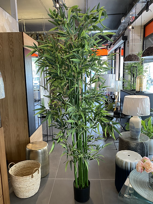 Large bamboo tree