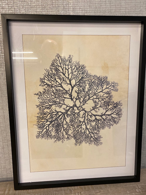 Coral frame 1