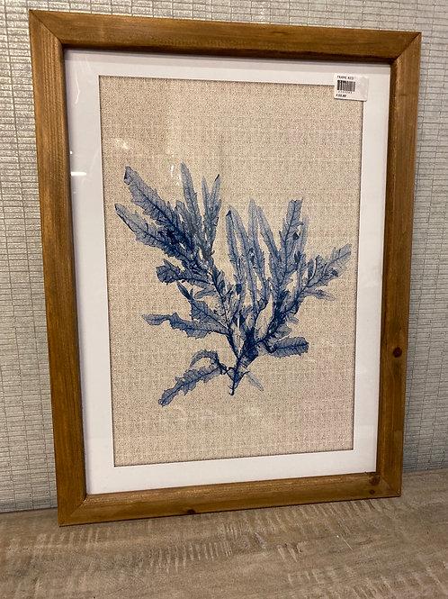 Blue coral frame